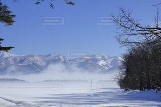地吹雪に生きる!の写真・画像素材[1195910]