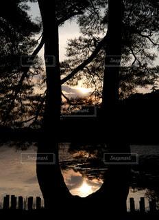 夕涼みに!の写真・画像素材[1278303]