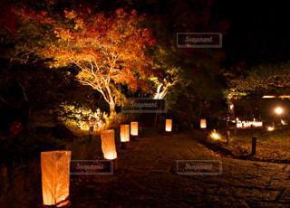 日本最古の日本庭園、翠楽園の紅葉ライトアップ。の写真・画像素材[1598977]