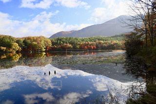 美しい観音沼の紅葉の写真・画像素材[1598993]