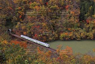 奥会津と只見第三橋梁を渡る只見線の写真・画像素材[1599061]
