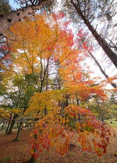 虹色紅葉の写真・画像素材[1609614]