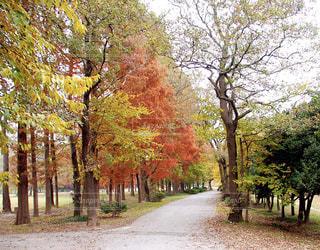 秋感ずるの写真・画像素材[1617062]