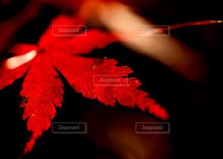 最後の秋色の写真・画像素材[1621542]