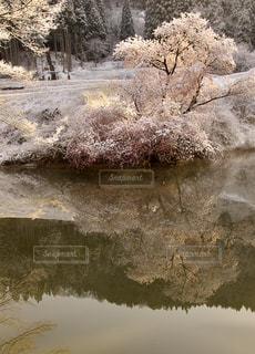 鏡桜の写真・画像素材[1657967]