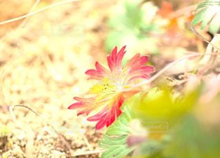 虹色に光っての写真・画像素材[1686532]