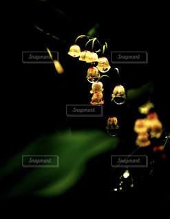 宝石のようなスズランの写真・画像素材[2149848]