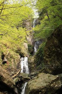 早戸大滝の写真・画像素材[1171612]