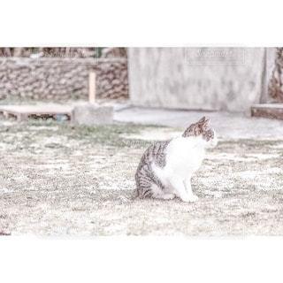 猫の写真・画像素材[42275]