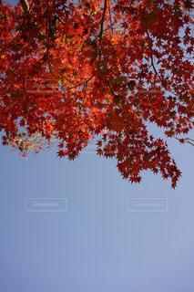 秋の空の写真・画像素材[1621089]