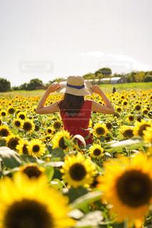 ひまわり畑での写真・画像素材[2172595]