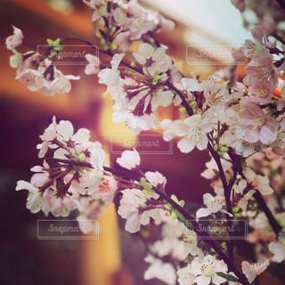 近くの花のアップの写真・画像素材[1123720]
