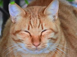 笑顔で昼寝の写真・画像素材[1144465]