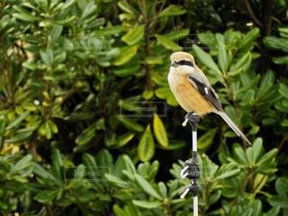 枝の上に座って鳥の写真・画像素材[1158064]