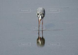 水の体の横に鳥立っての写真・画像素材[1222731]