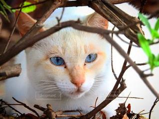 木の影からのぞく猫の写真・画像素材[1254955]