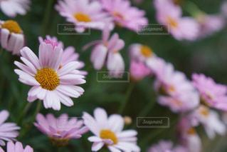 マンションロビーにあった花の写真・画像素材[1369059]