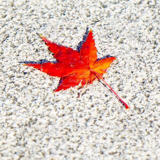 秋の写真・画像素材[1604450]