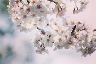 花の写真・画像素材[1987071]