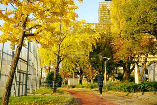 通りの真ん中にある木の写真・画像素材[2115341]
