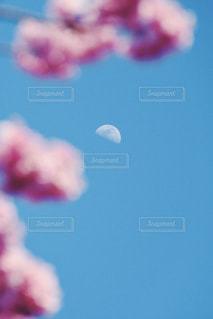 桜のフレームの写真・画像素材[1123774]