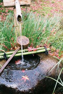 背景の水の庭の写真・画像素材[1617394]