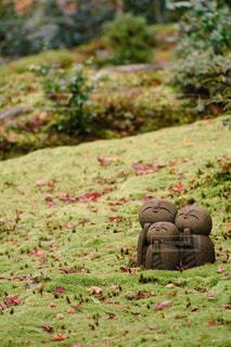 秋,紅葉,京都,フォトジェニック
