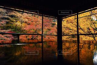秋,紅葉,京都,瑠璃光院,フォトジェニック