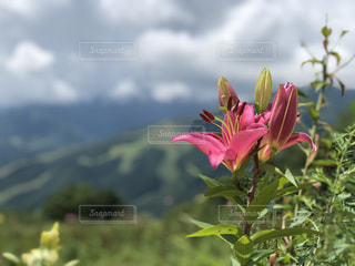 夏山の写真・画像素材[1420329]