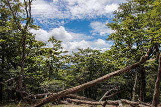 大台ケ原、樹々の切れ間から覗く青空。の写真・画像素材[1111425]