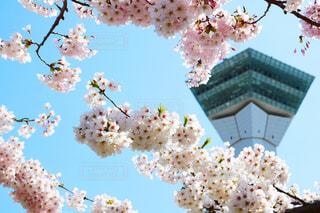 5月のお花見の写真・画像素材[1146188]