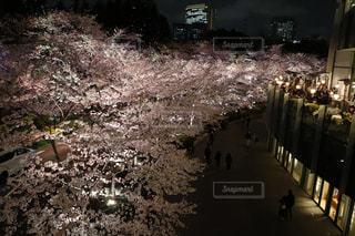 夜桜と東京の写真・画像素材[1146257]