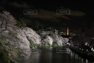 千鳥ヶ淵の桜の写真・画像素材[1146272]