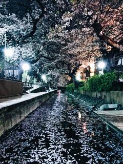 花,春,水,水路,夜桜,さくら,宿河原,2018年3月