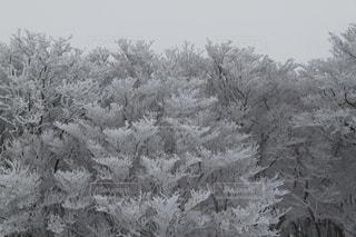 白,爽やか,癒し,旅行,華やか,樹氷,御在所,銀色,インスタ映え,2017年2月