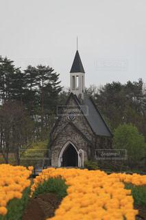 花畑,黄色,チューリップ,癒し,旅行,教会,牧歌の里,インスタ映え,2017年4月