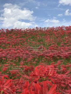 空,花,赤,雲,癒し,旅行,無加工,秋空,インスタ映え,多色,ヒーリングアート
