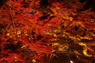 自然,風景,秋,紅葉,屋外,景色,気分転換,無加工,岐阜県,インスタ映え,多色,ヒーリングアート