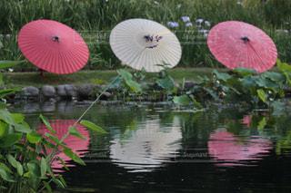 花傘の写真・画像素材[2190577]