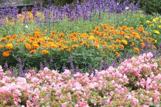 カラフルな花園の写真・画像素材[2342275]