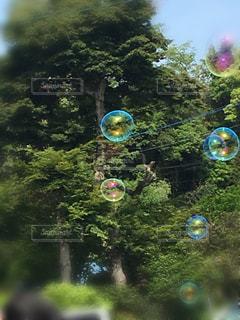 新緑の中でシャボン玉の写真・画像素材[1163842]