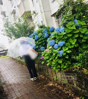 雨の日の通学の写真・画像素材[1225273]