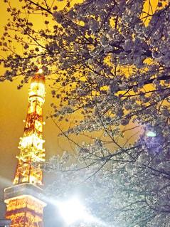 桜と東京タワーの写真・画像素材[1123307]
