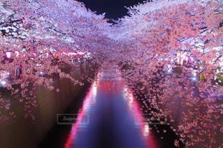 夜の街の景色の写真・画像素材[1122913]