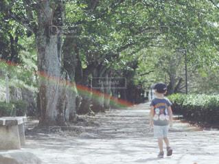 風景,公園,屋外,散歩,子供,並木道,フレア,男の子,お散歩,オールドレンズ,おでかけ,日中,ゴースト