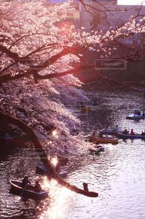 春,桜,ボート,水面,千鳥ヶ淵,九段下