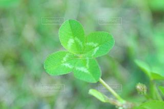 緑の葉の木の写真・画像素材[1207027]