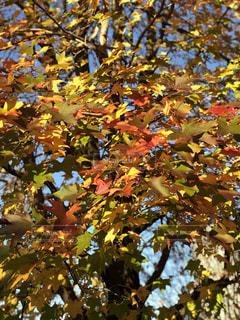 秋,東京,イチョウ,代々木公園,四季