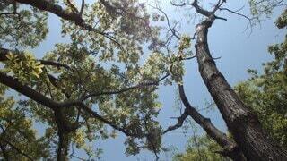 空,木,屋外,緑,葉,パン,逆光,iphone,16:9,日中,ワイド,動画,光り,フレアー