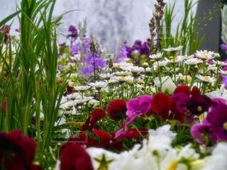 花園,♯神奈川県♯山下公園